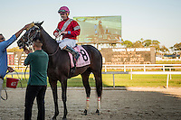 OLDSMAR, FLORIDA - FEBRUARY 11: McCracken #8, ridden by Brian Joseph Hernandez (pink hat), gets a cool down after winning the Sam F. Davis Stakes, and setting a new track record, at Tampa Bay Downs on February 11, 2017 in Oldsmar, Florida (photo by Douglas DeFelice/Eclipse Sportswire/Getty Images)