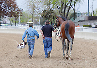 DONE TALKING and grooms after winning the GIII TVG Illinois Derby at Hawthorne Race Course in Cicero/Stickney, IL.