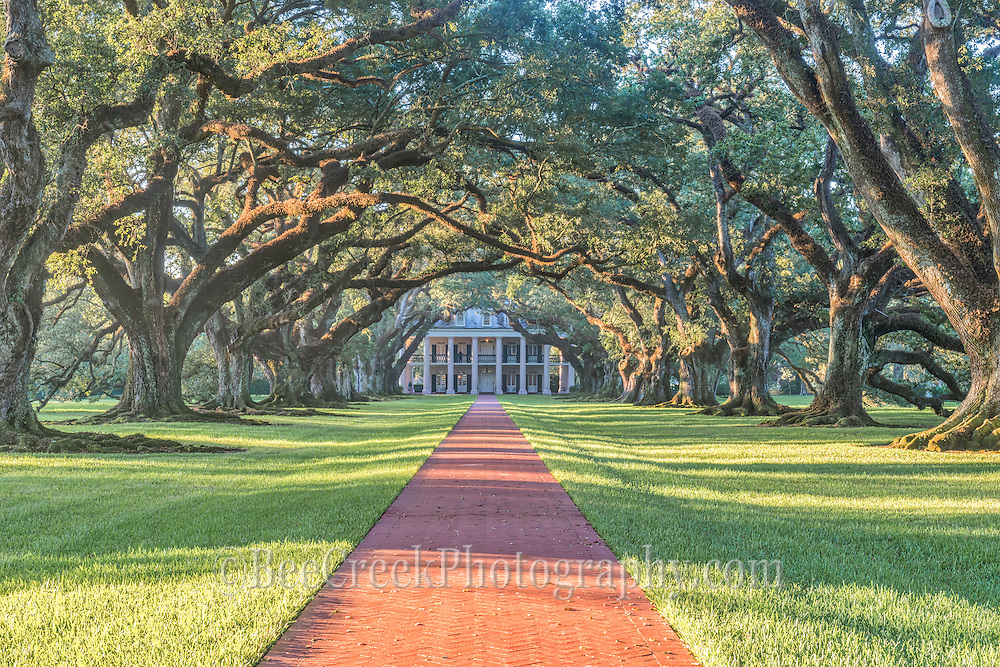 This is the view of sunrise at Oak Alley plantation in Lousiana.  We loved the light as it came through this canopy of branches to frame the path to the house. This mansion was built in the 1839 on a surgar cane plantation.  These lovely 300 year old live oaks trees which were here prior to plantations existance.