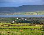 County Kerry, Ireland: Grass pastures on Valentia Island overlooking Portmagee Channel on the Skellig Ring