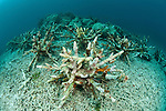 Artificial reef in the shape of a snowflake with corals growing