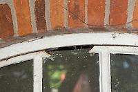 In ein Fenster ausgesägter Spalt als Öffnung zum Inneren eines Schuppens, Hohlräume als Unterschlupf, Zugang für Tiere, Fledermaus, Fledermäuse, Fledermausschutz, Fledermaus-Schutz, In a window sawed out gap as an opening to the inside of a shed, hollow cavities as a hiding place, access for animals, bat, bats, bat protection