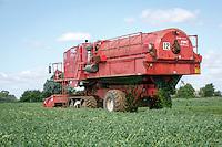Harvesting vining peas - Lincolnshire; July