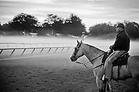 Horses exercise in the morning mist and fog on the Oklahoma Training Track at Saratoga Race Course in Saratoga Springs, New York on August 6, 2013.