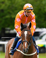 Eye of  The Water ridden by David Probert goes down to the start of the  Molson Coors Handicap  during Evening Racing at Salisbury Racecourse on 11th June 2019