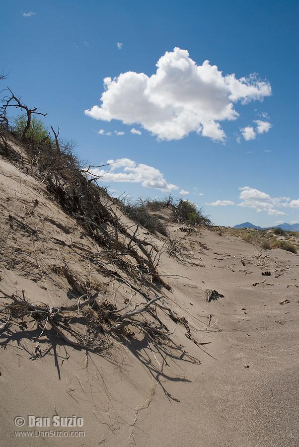 Sand dunes, Ash Meadows National Wildlife Refuge, Nevada