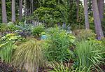Indianola, WA: Summer perennial garden in Douglas fir forest understory feturing grasses, fireweed, iris and lupine