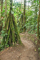 Rainforest trail at San Jorge de Milpe Eco-Lodge, Ecuador
