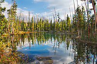 """""""Black and Green Reflects Blue""""  Yellowstone National Park  Alpine Lake 
