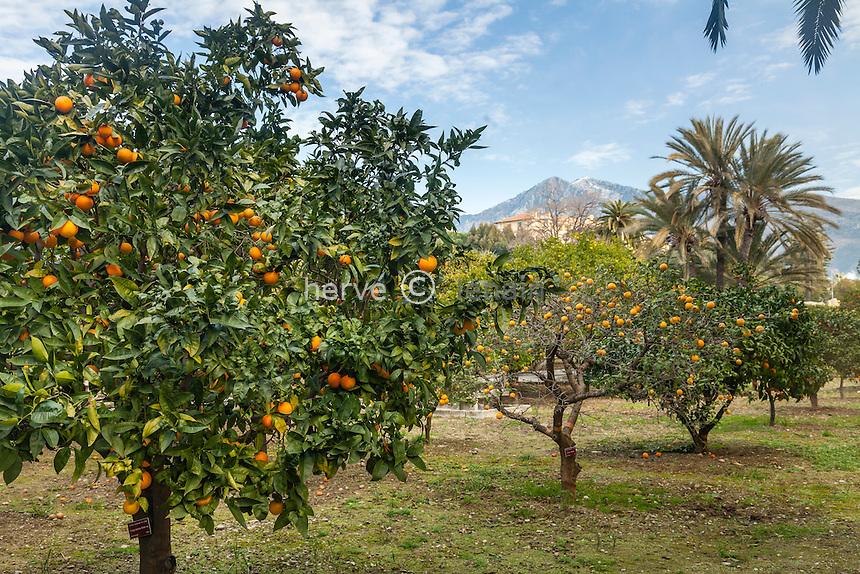 France, Alpes-Maritimes (06), Menton, la collection d'agrumes du palais Carnoles en février durant la fête du citron.