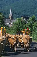 Europe/France/Auvergne/12/Aveyron/Env. de Saint-Come d'Olt: Passage du troupeau lors de la transhumance en Aubrac