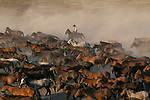 Pictured: Wild horses create a cloud of dust as they charge across a plain.   The animals' dust cloud became so thick that workers rounding them up could barely be seen through it.<br /> <br /> The large group of horses and the workers, who wore cowboy hats, were photographed in the village of Kayseri, Turkey.   Photographer Deniz Tetik, 34, said around 400 wild horses roam on wide flat land at the village.   SEE OUR COPY FOR DETAILS<br /> <br /> Please byline: Deniz Tetik/Solent News<br /> <br /> © Deniz Tetik/Solent News & Photo Agency<br /> UK +44 (0) 2380 458800