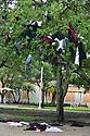 PEMBROKE PINES, FL - MAY 15: The aftermath of a tradition is on display after graduates dipped their uniforms in the campus fountain and threw them into a tree at Pembroke Pines Charter High School on May 15, 2020 in Pembroke Pines, Florida. Because of social distancing mandates instituted by the state to curtail the spread of COVID-19, the 2020 graduates received their diplomas in a near-empty auditorium with no friends, family or relatives allowed to attend. A video of each student walking the stage to receive their diploma will be streamed on the school's scheduled graduation date of May 29.   ( Photo by Johnny Louis / jlnphotography.com )