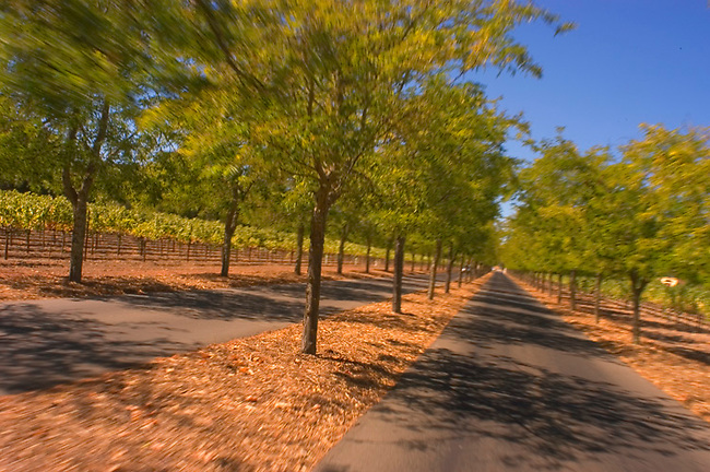 Road leading to Sterling Vineyards, Calistoga, CA