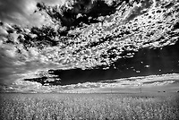 Crop and clouds, Val Marie, Saskatchewan, Canada