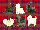 Kate, CUTE ANIMALS, LUSTIGE TIERE, ANIMALITOS DIVERTIDOS, paintings+++++Scotties2007-4.,GBKM486,#ac#, EVERYDAY ,cat,cats