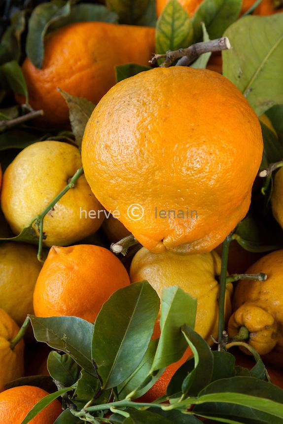 France, Alpes-Maritimes (06), Menton, agrumes sur le marché, cédrat de Florence et citron des quatres saisons.