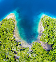 aerial view of a fringing reef, growing along the edge of a mangrove forest, Raja Ampat Islands, West Papua, Indonesia, Pacific Ocean
