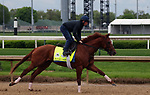 April 26, 2019 : Plus Que Parfait works out  at Churchill Downs, Louisville, Kentucky, preparing for a start in the Kentucky Derby. Owner Imperial Racing LLC, trainer Brendan P. Walsh. By Point of Entry x Belvedera (Awesome Again) Mary M. Meek/ESW/CSM