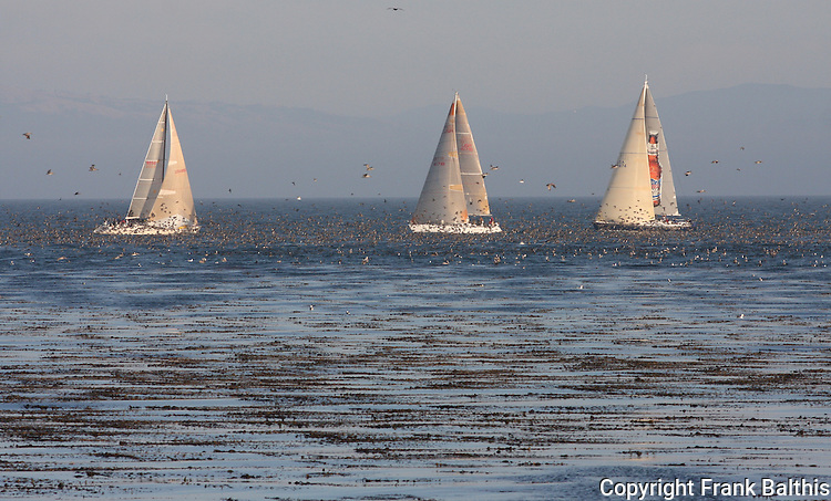 sailing Monterey Bay with Sooty shearwaters