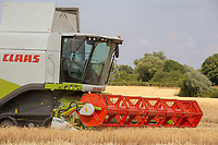 Harvesting Winter Barley in Lincolnshire<br /> &copy;Tim Scrivener Photographer 07850 303986<br />      ....Covering Agriculture In The UK....