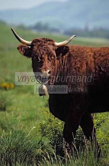 Europe/France/Auvergne/15/Cantal/Parc Régional des Volcans/Env d'Allanche: Buron de la Croix Blanche - Vache Salers