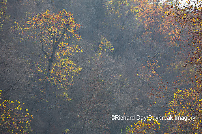 65045-01113 Trees in fall, Ozark National Scenic Riverway near Akers Ferry, MO