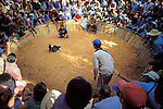 There's not an empty seat in the house at a cock fighting ring deep in Cuba's western countryside. Though technically illegal, there is no shortage of attendees.