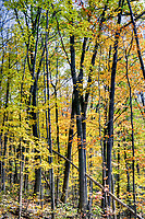 Mystery Falls, Au Sauble River Trail, Arkona Ontario, Rural Lambton County