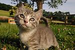 A kitten on Springdale Farm in PA.