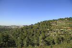 Israel, Hahamisha forest in Jerusalem mountains