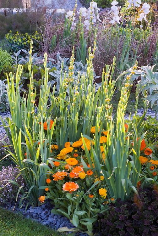 Calendula, oxalis, Iris in spring flower garden