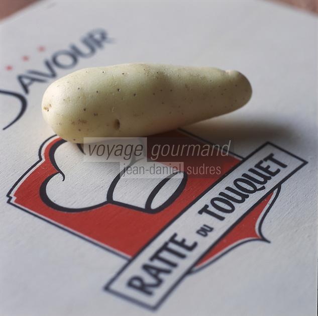 Europe/France/Nord-Pas-de-Calais/Pas-de-Calais/62/Le Touquet: Ratte du Touquet