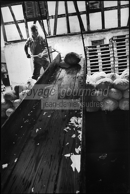 Europe/France/Alsace/67/Bas-Rhin/ Krautergersheim: Une choucrouterie chez Monsieur Pfleger, producteur de choucroute- Déchargement des remorques de  choux