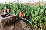 Malawi, Thyolo, NGO CARD Churches Action in Relief and Development, Bewaesserungssystem im Dorf Samuti, Frau Esnart Miles, 55, sie ist HIV positiv, bewaessert Maisfeld