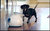 BNPS.co.uk (01202) 558833<br /> Picture: ifetch<br /> <br /> Dog owners who are tired of playing fetch with their pet pooches can now sit back and relax - as the latest doggie gadget can do it for you. The contraption dubbed the iFetch will launch tennis balls for dogs to catch and bring back without any human interaction. The device works by using a special shoot that will throw a ball between 10ft and 30ft in the air from a hole at the front of the machine. Once canines have grabbed it they simply need to bring it back and place it in a compartment at the back for the iFetch to launch once again. <br /> <br /> The gadget was invented by Denny Hamill and his grandson Grant, 19, who were becoming tired of chucking balls every few minutes for their poodle Prancer.