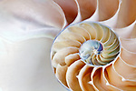Inside of nautilus shell