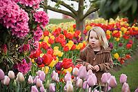 Young child (girl) admiring tulipa flowers at Tulip Festival, Skagit Valley Washington