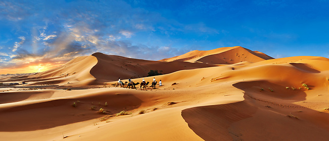 Camels rides amongst the Sahara sand dunes of erg Chebbi, Morocco, Africa