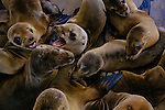 Employees and volunteers have taken on the task of caring for more than 100 rescued sea lion pups at the Pacific Marine Mammal Center in Laguna Beach, California February 25, 2015.