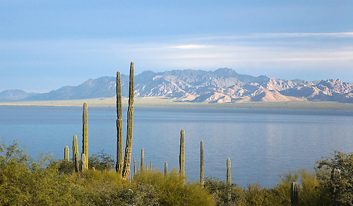 Cactus provide the foreground of Bahia Concepcion along the Sea of Cortez in Baja California, Mexico