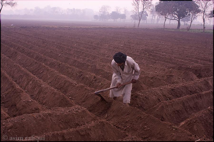 Okara, Punjab, Pakistan. 2008. Landless farmer at dawn at work in a field