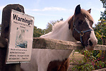"""""""Bullseye"""" the pony who is covered by a """"warning sign"""" advising that he suffers from diabetes, at Stolz Farm in Hicksville on Thursday October 20, 2005. (Newsday Photo / Jim Peppler)."""