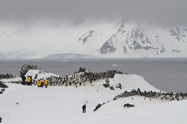 Tourists watch and film Chinstrap Penguins on Half Moon Island. Sth Shetland Is. Antarctica