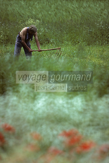 Europe/France/Midi-Pyrénées/46/Lot/Causse de Gramat/Env de Gramat: Binage dans un champs<br /> PHOTO D'ARCHIVES // ARCHIVAL IMAGES<br /> FRANCE 1990