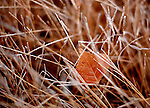 Leaf and Grass.  From the Palmer Divide Series.