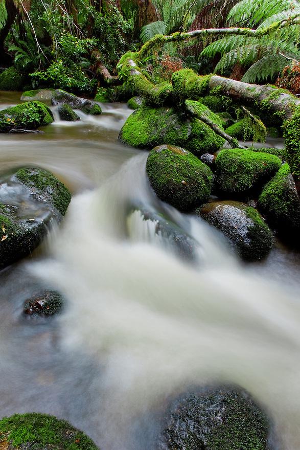 Rain forest Tasmania Australia