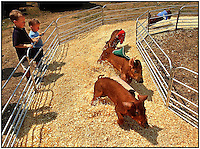 Two boys watch pigs racing around a pen at a county fair.  Model released image can be used to illustrate many purposes.