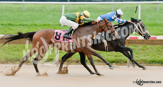 Stormin Wendy winning at Delaware Park on 8/1/13