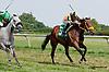 Nashley's Vow winning at Delaware Park on 8/17/13